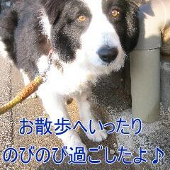 4_20091201182600.jpg