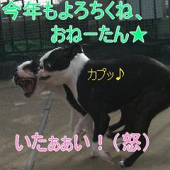 4_20100111192411.jpg