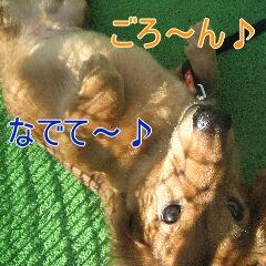 8_20091201180652.jpg