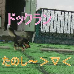 IMG_1324.jpg