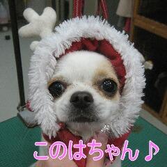 IMG_7594_20091212192042.jpg
