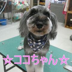 IMG_8629.jpg