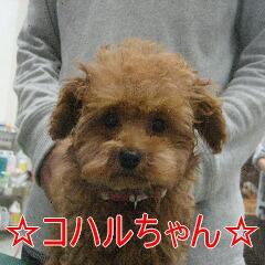 IMG_9800_20100111192603.jpg