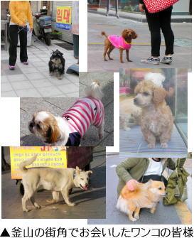釜山の街角でお会いしたワンコの皆様