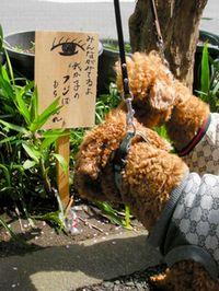 東村山の犬フン放置警告看板