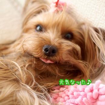 1_20110703184347.jpg