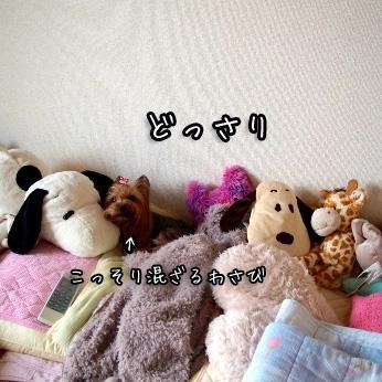 1_20110704144343.jpg