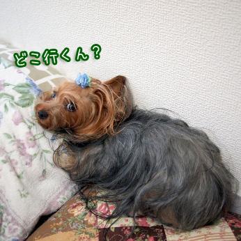 1_20110721100828.jpg