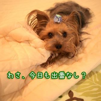 1_20110724145534.jpg