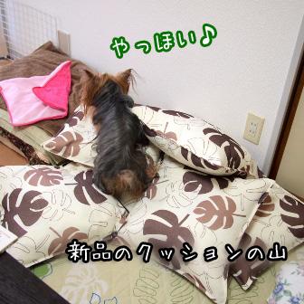 1_20110728153601.jpg