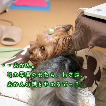 1_20110802193124.jpg