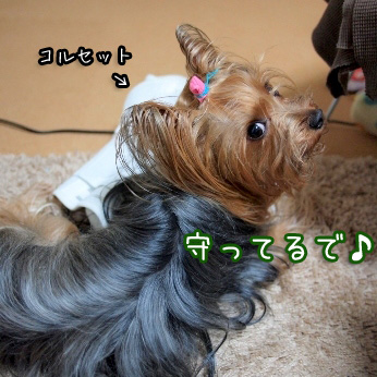 2_20110608195752.jpg