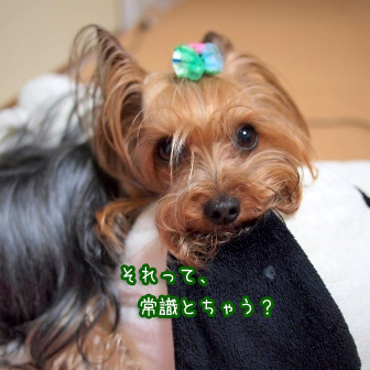 2_20110611084734.jpg
