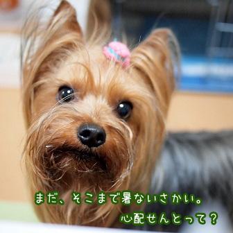 2_20110615200059.jpg