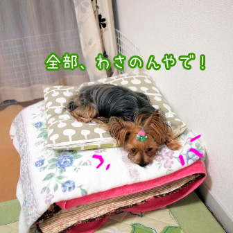 2_20110620191530.jpg