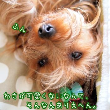 2_20110621193134.jpg