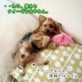 2_20110703184347.jpg