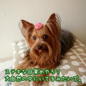 2_20110713160727.jpg