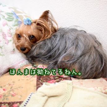 2_20110721100828.jpg