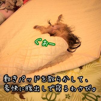 2_20110724145534.jpg