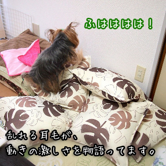 2_20110728153601.jpg