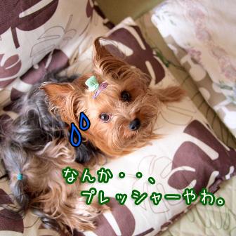 2_20110801144158.jpg