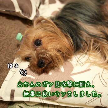 2_20110802193124.jpg