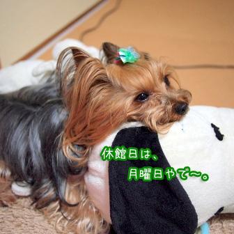 3_20110611084734.jpg