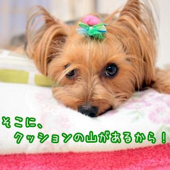 3_20110620191530.jpg