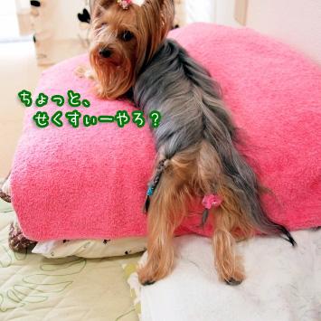 3_20110624111140.jpg