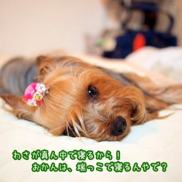 3_20110629121219.jpg