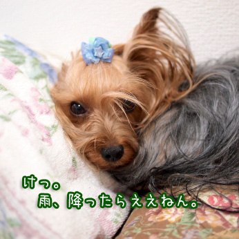 3_20110721100827.jpg