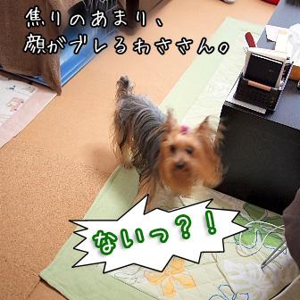 4_20110617164857.jpg