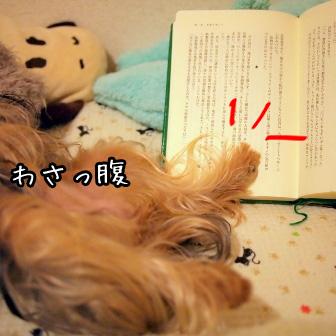 4_20110619182012.jpg