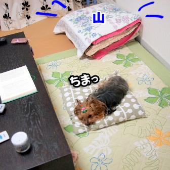 4_20110620191530.jpg