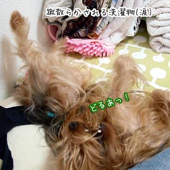 4_20110703184347.jpg