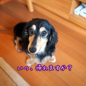 4_20110724145534.jpg