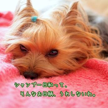 5_20110603173719.jpg