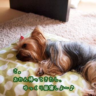 5_20110606204734.jpg
