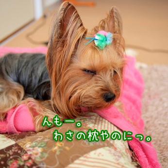 5_20110614084019.jpg