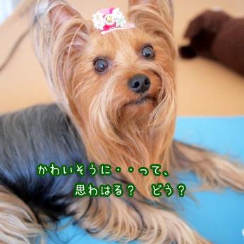 5_20110622191338.jpg