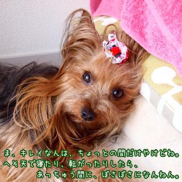 5_20110624111140.jpg