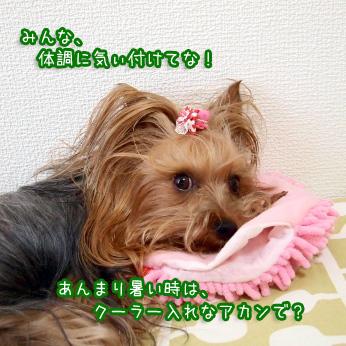 5_20110703184346.jpg
