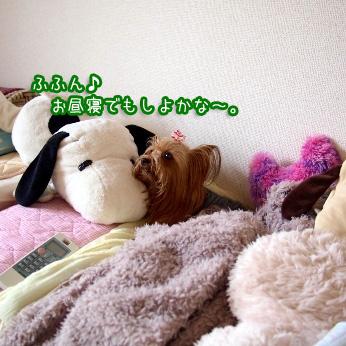 5_20110704144342.jpg