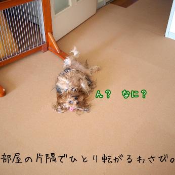 5_20110711153037.jpg