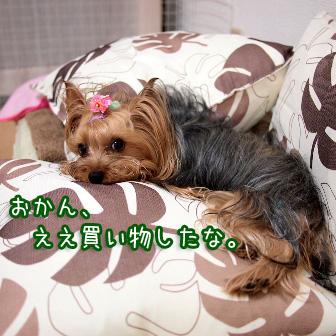 5_20110728153600.jpg