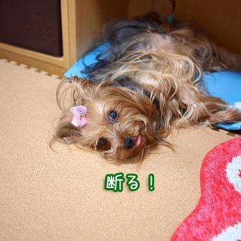 6_20110707144348.jpg