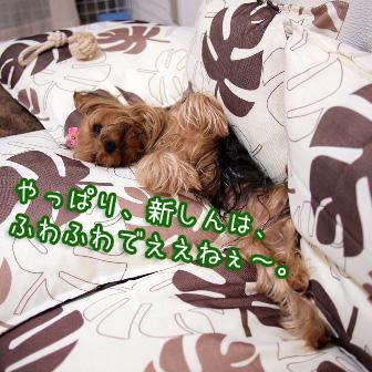 6_20110728153600.jpg