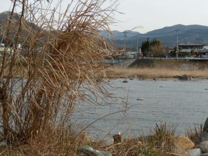 DSCN1014_団地裏強風_20120307