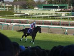 返し馬:ヴィクトワールピサ